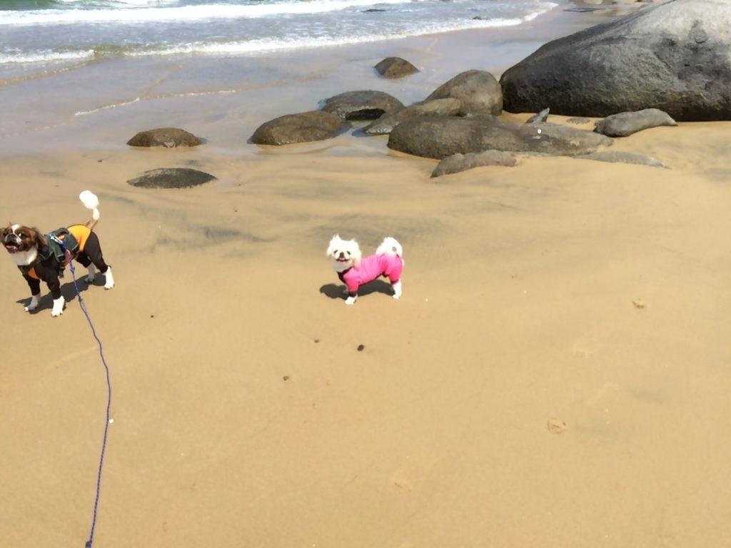 糸島の海で犬と遊んだよ