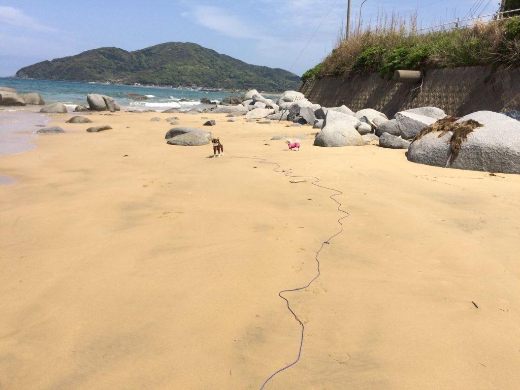 糸島の海で犬を可愛がってみた 犬と遊ぶ