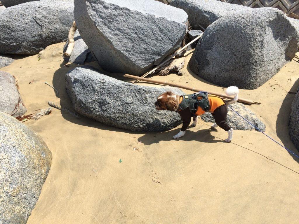 海 犬と遊ぶ 危険がないか確認