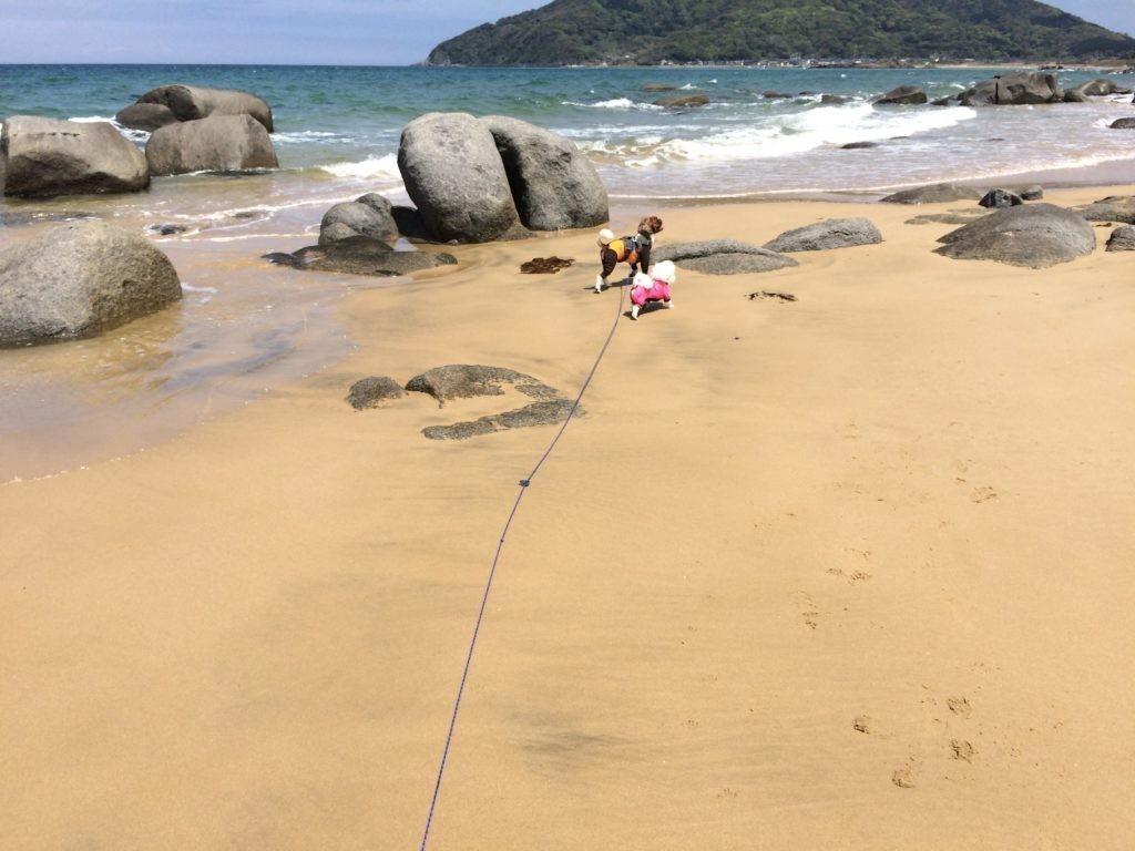 糸島の海で犬と遊ぶをやってみた