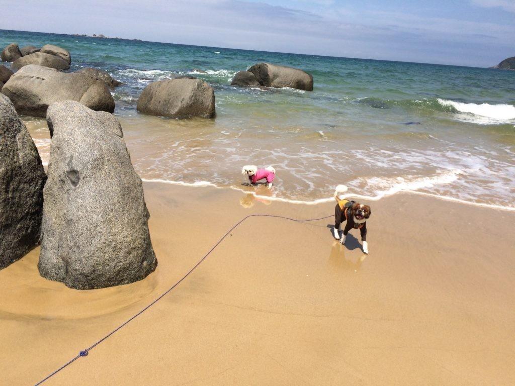 犬と海で遊ぶ 糸島の海 ペキニーズ