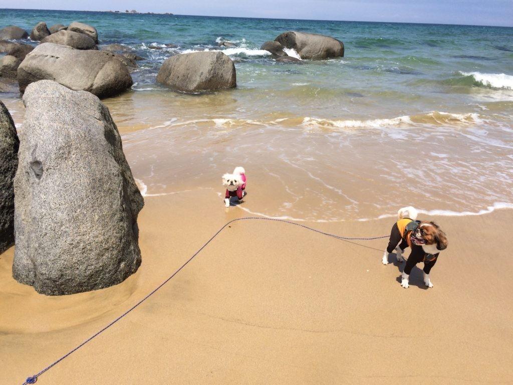 糸島 犬と遊ぶ 海 ペキニーズ