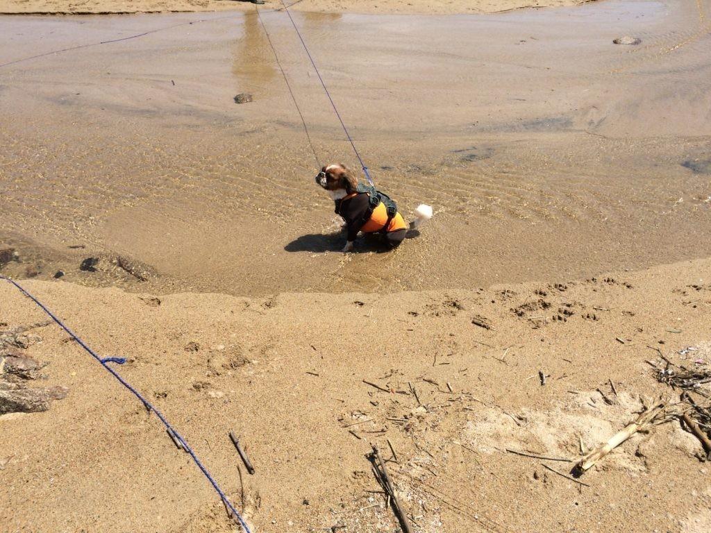 ロングリード 糸島 海で犬と遊ぶをやってみた