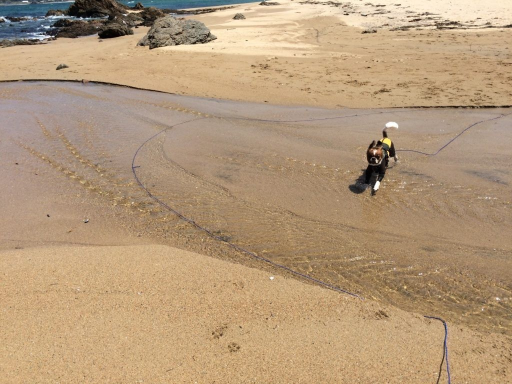 海で犬と遊ぶ 犬を可愛がるをやってみた