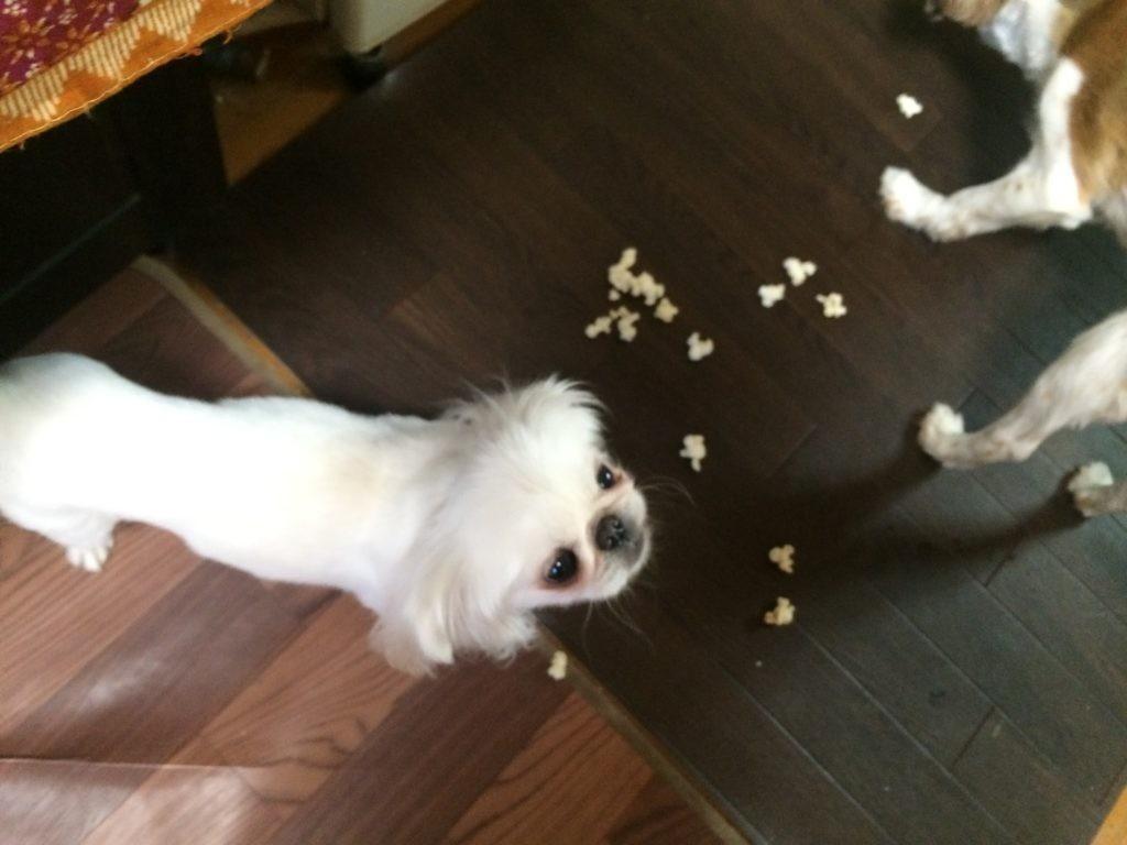 エアポップコーン 犬のおやつ ダイエットやってみた