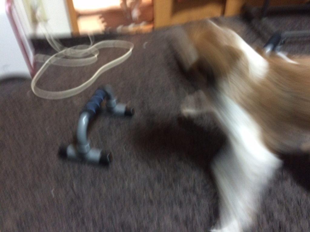 タス 犬 逃げる